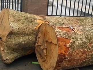 烂木头卖出168万 成本仅200元!