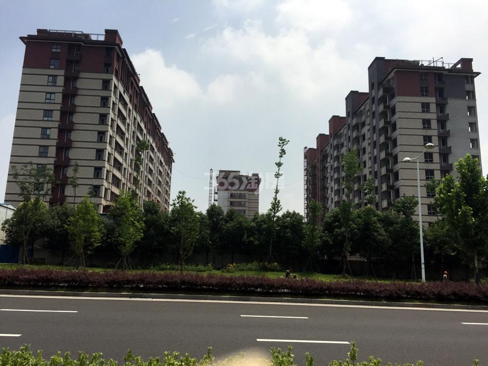 高科荣境西面的楼栋实景图(7.5)