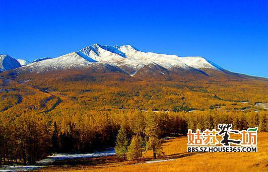 秋天的金色童话——新疆额纳斯